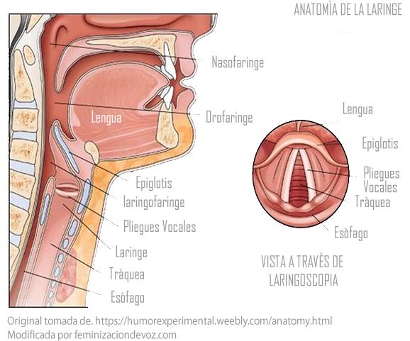 Bogota. Terapeuta del lenguaje - Fonoaudiologa experta en voz ...